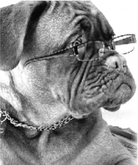 LPP dog with reading glasses